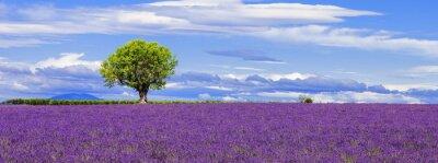 Canvastavlor Panoramautsikt över lavendel fält med träd
