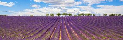 Canvastavlor Panoramautsikt över Lavender fält
