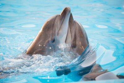 Canvastavlor par av delfiner dansar i vatten