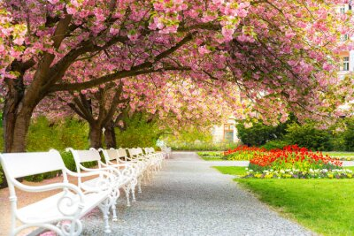 Canvastavlor Park with blossom sakura, flower lawn and benches
