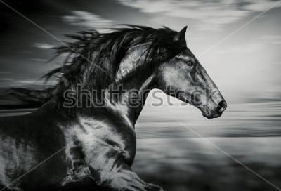 Canvastavlor Porträtt av spanska häst, svartvitt foto