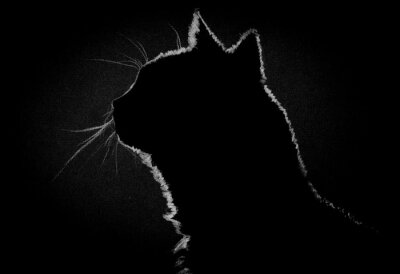 Canvastavlor Profil katt i mörkret
