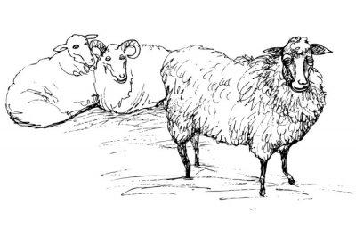 Canvastavlor Ram och får