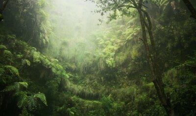 Canvastavlor Regenwald tropisch nass abenteuer