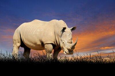 Canvastavlor Rhino på bakgrunden av solnedgångskyen