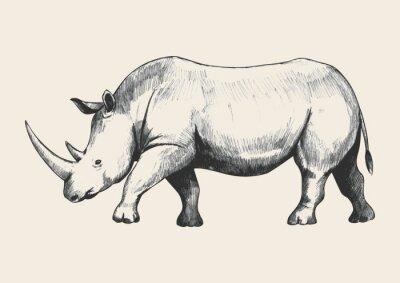 Canvastavlor Rhino skissar