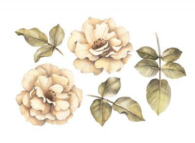 Canvastavlor Ritar teckningen av rosor