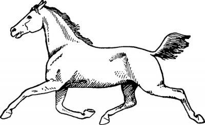 Canvastavlor ritning häst tappning
