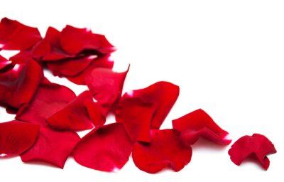 Canvastavlor Röda rosor kronblad