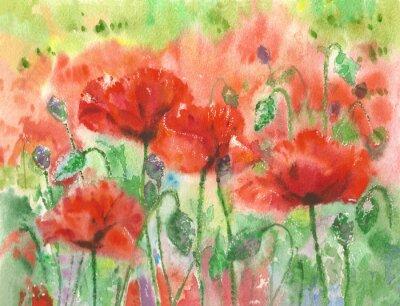 Canvastavlor Röda vallmor blommor bakgrund, vattenfärg.