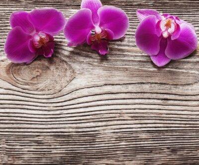 Canvastavlor Rosa orkidé blommor på en trä bakgrund