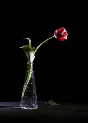 Canvastavlor Samotny tulipan