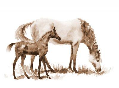 Canvastavlor Sepia akvarell sto och föl på vitt. Vackra handmålade illustration av två hästar på fältet.