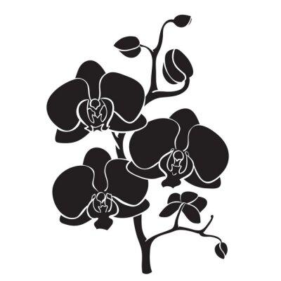 Canvastavlor Siluett orkidé gren