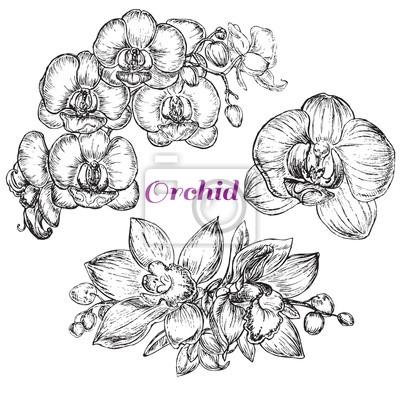 Canvastavlor skiss stil svart orkidé