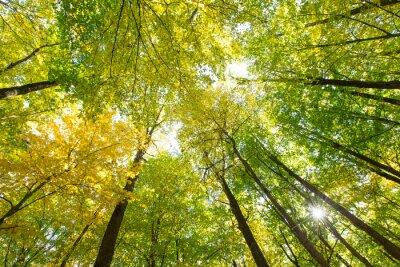 Canvastavlor skog
