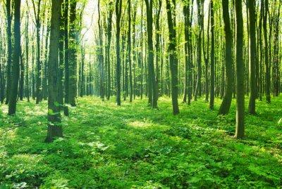 Canvastavlor skog grön