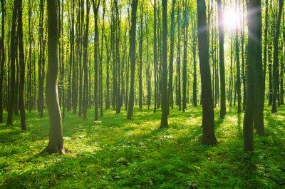 Canvastavlor skog på våren