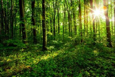 Canvastavlor skogsträd