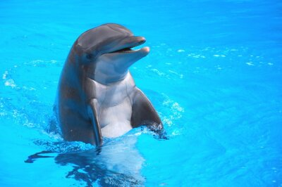 Canvastavlor Śmiejący się w delfin Loro Park na Teneryfie
