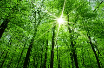 Canvastavlor solen skiner genom trädgrenar