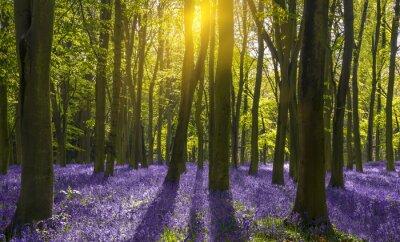 Canvastavlor Solljus kastar skuggor över blåklockor i en skog