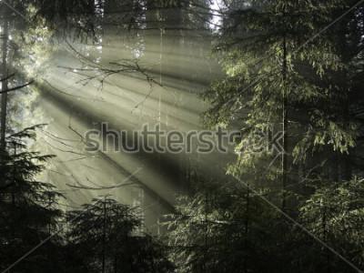 Canvastavlor Solljus skiner genom träden