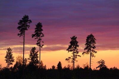 Canvastavlor Solnedgång på landsbygden
