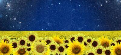 Canvastavlor solrosor fält