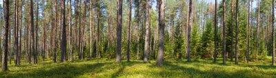 Canvastavlor Sommar barrträd skog panorama