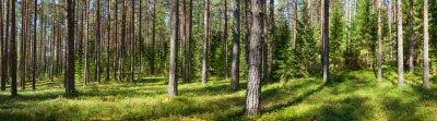 Canvastavlor Sommar skog panorama
