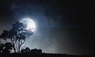 Canvastavlor Sommarnatt bakgrund