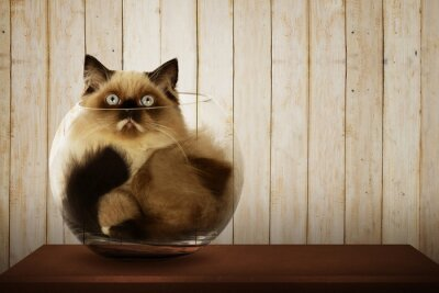 Canvastavlor Söt persisk katt inne glasskål