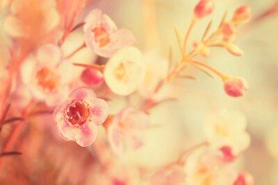 Canvastavlor Söt ton och mjukt fokus blomma