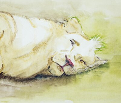 Canvastavlor Sovande lejon. Den badda teknik nära kanterna ger en mjuk fokus effekt på grund av den förändrade ytjämnhet av papperet.