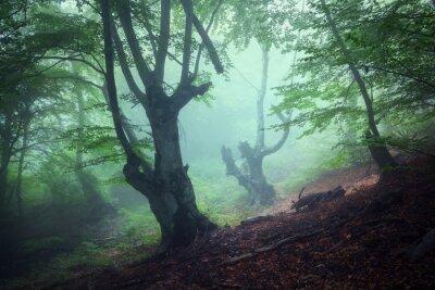 Canvastavlor Spår genom en mystisk mörk gammal skog i dimma. Höst