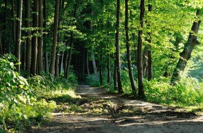 Canvastavlor spår i skogen