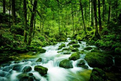 Canvastavlor Ström i skogen