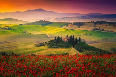 Canvastavlor Stunning red poppies blossom on meadows in Tuscany, Pienza, Italy