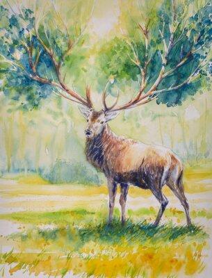 Canvastavlor Summer.Red hjort med stora horn på vars växa leaves.Picture skapas med vattenfärger.