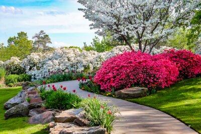 Canvastavlor Svängd bana genom bankerna av Azeleas och under dogwood träd med tulpaner under en blå himmel - Skönhet i naturen