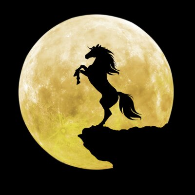 Canvastavlor svart häst silhuett
