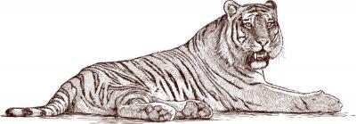 Canvastavlor tiger liggande