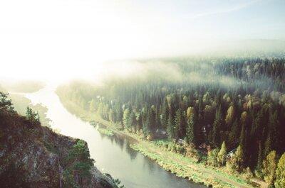 Canvastavlor tjock morgondimman i barrskog. barrträd, snår av grön skog.