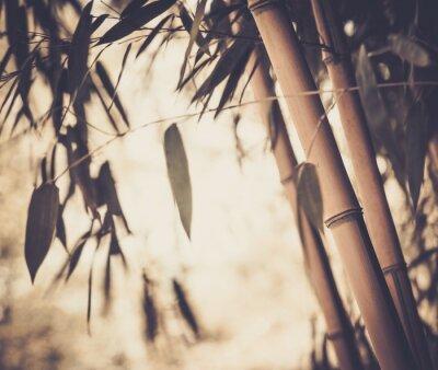Canvastavlor Tonas bild av en bambu växt