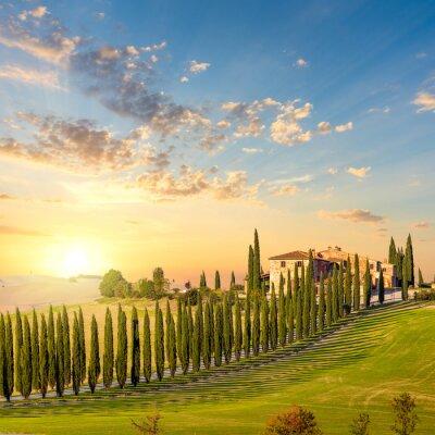 Canvastavlor Toscana vid solnedgången - landsbygdsväg med träd och hus