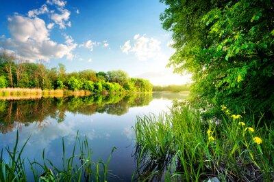 Canvastavlor Träd vid lugna floden