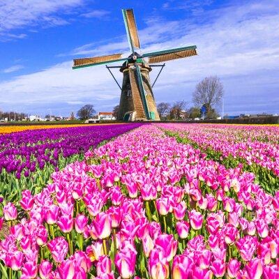 Canvastavlor traditionella Holland landsbygden - väderkvarnar och tulpaner