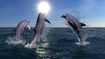 Canvastavlor tre delfiner