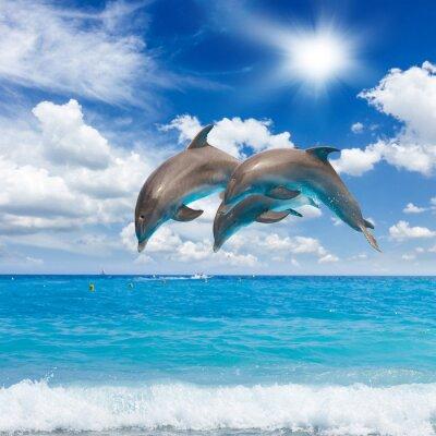Canvastavlor tre hoppande delfiner